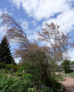 Alain Bigou, le 28 mai 2019 (Saint Pétersbourg (Jardin Botanique))