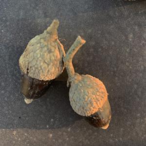 Photographie n°2345203 du taxon Quercus suber L. [1753]