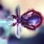 Ophrys speculum Link [nn161250] par Liliane Roubaudi le 17/03/1997 - Tunisie