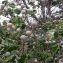 fruits en boule dure [nn0] par y.mataloue@... le 17/01/2020 - Koné