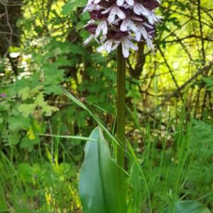 Photographie n°2410635 du taxon Orchidaceae
