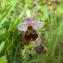 Aurélien Bour - Ophrys fuciflora subsp. fuciflora