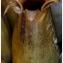 Pierre Papleux - Saponaria officinalis L. [1753]