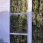 Candelaria concolor (Dicks.) Stein [nn58792] par yuji le 12/02/2021 - Paris