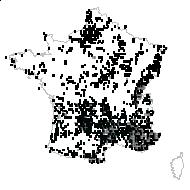 Festuca ovina L. [1753] - carte des observations
