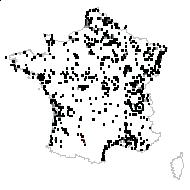 Phragmites australis (Cav.) Trin. ex Steud. subsp. australis - carte des observations