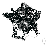 Betula pendula Roth - carte des observations