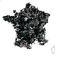 Corylus avellana L. - carte des observations