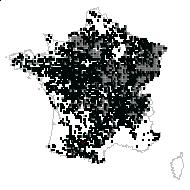 Quercus brevipedunculata Cariot & St.-Lag. - carte des observations