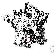 Trifolium pratense L. - carte des observations