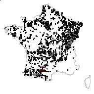 Cardamine pratensis L. - carte des observations