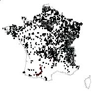 Heracleum sphondylium L. - carte des observations