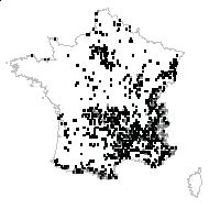 Silene vulgaris (Moench) Garcke subsp. vulgaris - carte des observations