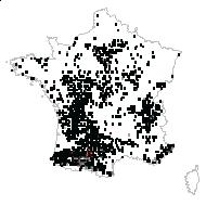 Tamus communis L. - carte des observations