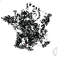 Calluna vulgaris (L.) Hull - carte des observations