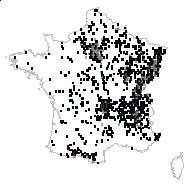 Acer platanoides L. - carte des observations