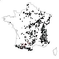 Aquilegia nigricans sensu Gaut. - carte des observations
