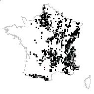 Campanula rotundifolia L. - carte des observations