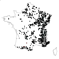 Campanula trachelium L. - carte des observations