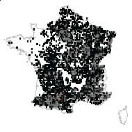 Cornus sanguinea L. - carte des observations