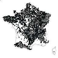 Fagus sylvatica L. - carte des observations