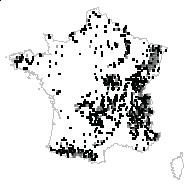 Luzula sylvatica (Huds.) Gaudin - carte des observations
