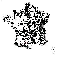 Prunella vulgaris L. - carte des observations