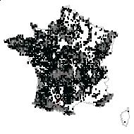 Pteris aquilina L. - carte des observations
