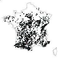 Stachys officinalis (L.) Trévis. - carte des observations