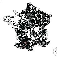 ULMACEAE - carte des observations