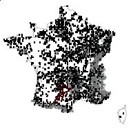 CAMPANULACEAE - carte des observations