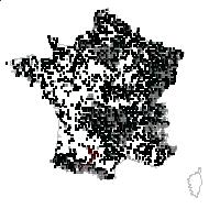 ONAGRACEAE - carte des observations