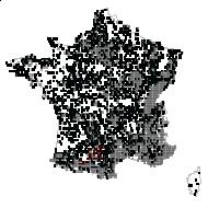 EUPHORBIACEAE - carte des observations