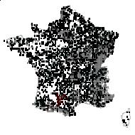 PRIMULACEAE - carte des observations