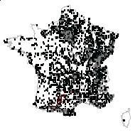 MALVACEAE - carte des observations