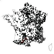 APOCYNACEAE - carte des observations