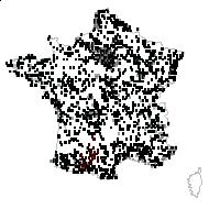 SOLANACEAE - carte des observations