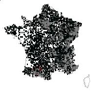 SAPINDACEAE - carte des observations
