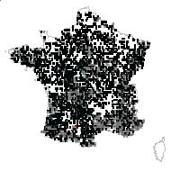 RHAMNACEAE - carte des observations