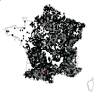 CORNACEAE - carte des observations