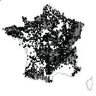 DRYOPTERIDACEAE - carte des observations