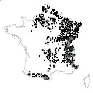 MELANTHIACEAE - carte des observations
