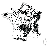 Epilobium montanum L. - carte des observations