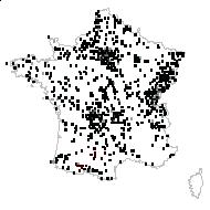 Rumex obtusifolius L. - carte des observations