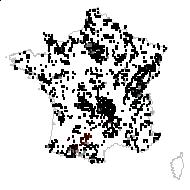 Ranunculus acris L. [1753] - carte des observations