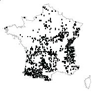 Ranunculus tuberosus Lapeyr. - carte des observations