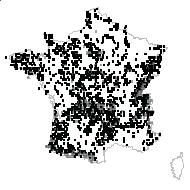 Potentilla erecta (L.) Räusch. subsp. erecta - carte des observations