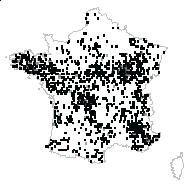 Pyrus communis L. - carte des observations