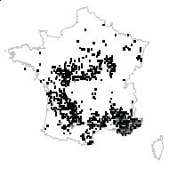 Sorbus domestica L. - carte des observations