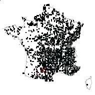 Galium mollugo L. - carte des observations